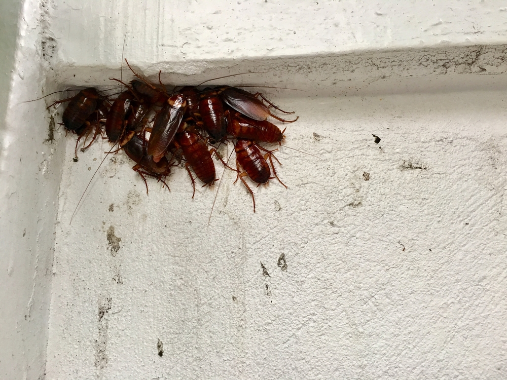 How Do I Get Rid Of Cockroaches in a Microwave?